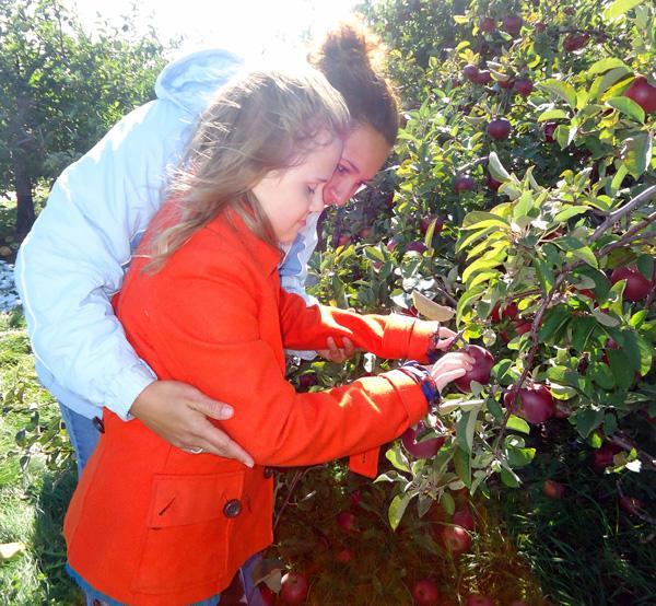birchtree_apple_picking2