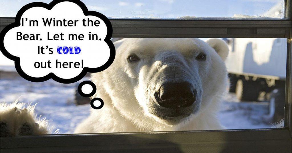 winter-the-bear
